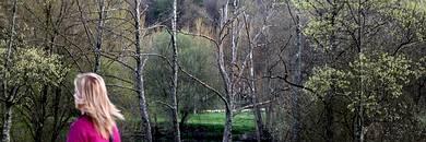 Ameneiros secos na beira do Miño