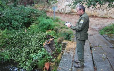 Axentes F. Medioambientais traballando na mapificación das zonas afectadas pola Phythophthora alni que afecta os amieiros dos cursos fluviais da Galicia dos mil rios.