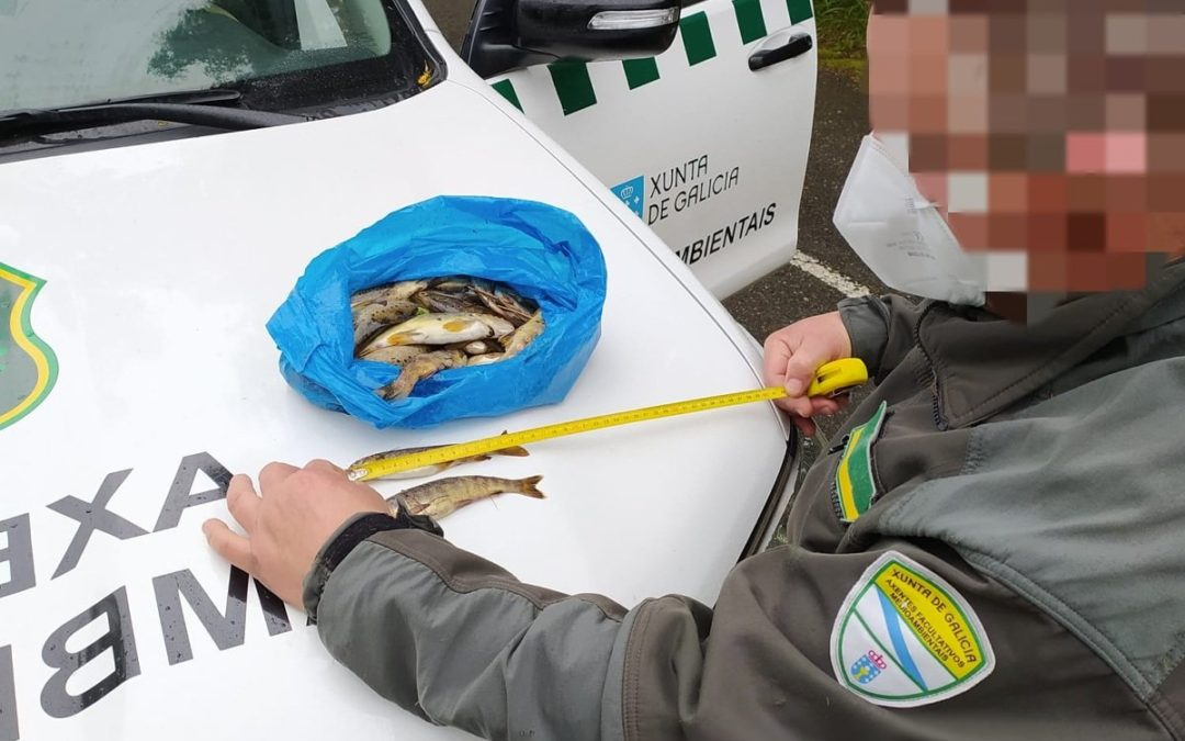 Axentes Ambientais interceptan en Forcarei a un furtivo con máis de 30 troitas por debaixo da talla legal